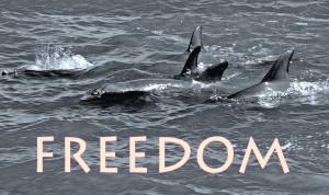 Shaman Delaware Freedom